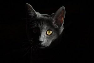 El poder secreto de los gatos y sus increíbles habilidades especiales