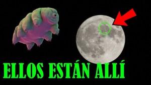 Revelan que miles de tardígrados ultrarresistentes están en la Luna