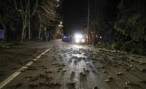 Terror en Europa, miles de pájaros caen muertos