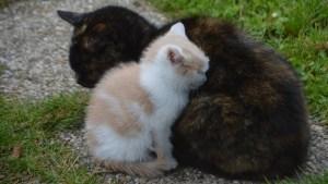 Una gata lleva a su cría enferma a un hospital en Turquía y los atienden