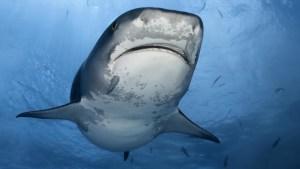 Captan a un tiburón de entre 3 y 4 metros frente a una playa española