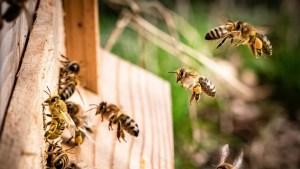 """Científicos advierten que la radiación de los teléfonos móviles puede ser una de las causas de la """"dramática disminución de insectos"""""""