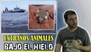 Las extrañas criaturas halladas a 5 km bajo el hielo de la Antártida