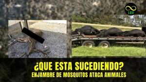 ¿Qué está pasando en EEUU? – Enjambre de mosquitos dejan sin vida a animales