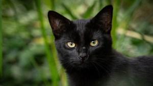 Una gata desaparecida hace más de 2 años se reencuentra con su dueño tras ser hallada a unos 100 kilómetros de su casa