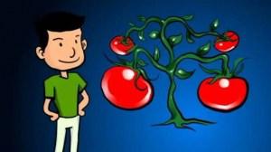 Alimentos Transgénicos y procesados Vs Alimentos naturales y orgánicos