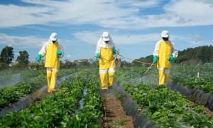 Alta concentración de agroquímicos en más de un tercio de las tierras cultivadas
