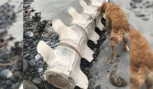 Descubren los restos de una gigantesca y misteriosa criatura en una playa de Escocia
