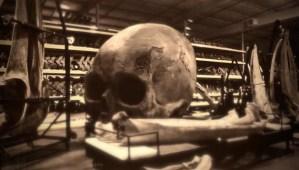 El 'Gigante de Cuma' descubierto en 1938 media 24 metros