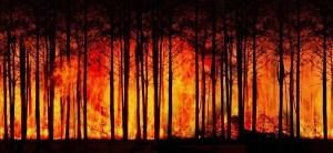 La Agenda detrás de las Deforestaciones en todo el mundo