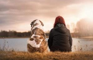 Perros y humanos – Los secretos de una amistad inquebrantable