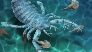 Hallan fósiles de un escorpión de un metro de largo que vivió hace 435 millones de años, uno de los principales depredadores marinos de su tiempo