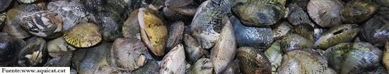 acuicultura integrada multitrófica