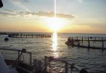 jaula de acuicultura. Foto: magtama.gob.es