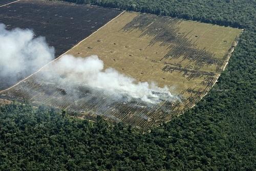 Deforestación en la Amazonia