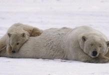 Greenpeace: campaña para salvar el Artico