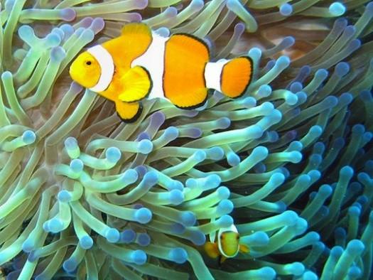 Australia-muralla-coralina-DerkJan