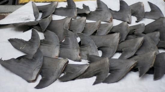 tiburones-aletas-finning