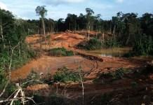 Guyana: deforestación