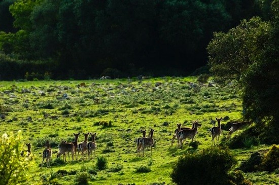 Cadiz-La-Almoraima-caza