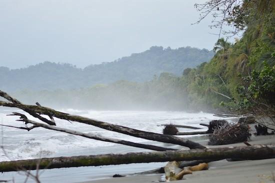 Olas y marejadas se comen las playas del Parque Nacional Cahuita, donde la vegetación pierde raíces y termina en el mar. Crédito: Diego Arguedas/IPS