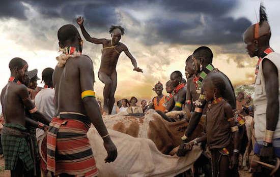 Un hombre hamer del valle del Omo, en Etiopía, salta hábilmente por encima de una fila de toros como parte de una ceremonia matrimonial. © Salvatore Valente / Survival International
