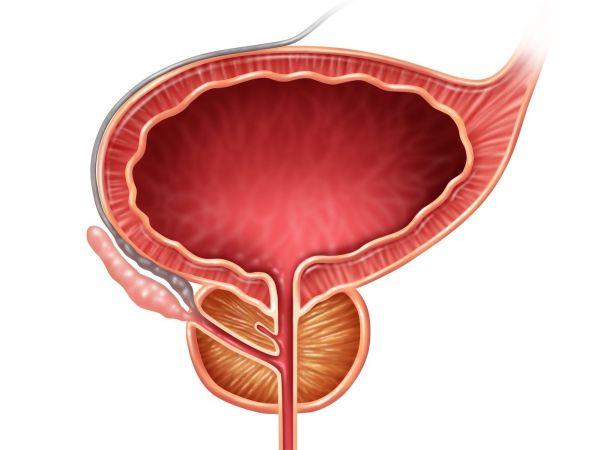 próstata y tracto urinario