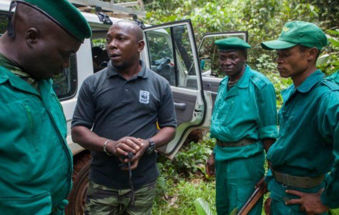 WWF ha trabajado en la cuenca del Congo durante más de 10 años. ©WWF