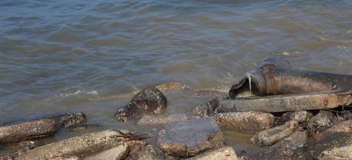 UNRWA/Khalil Adwan Las aguas residuales contaminan el acuífero costero, que es la principal fuente de agua para los residentes de Gaza