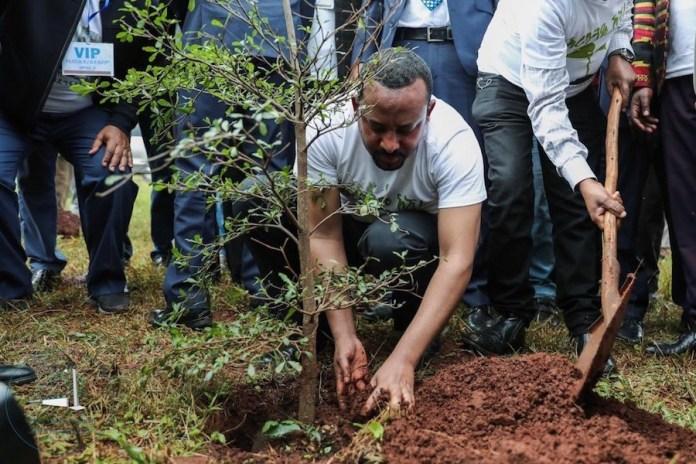 Etiopía: el primer ministro Abiy Ahmed en la plantación de árboles