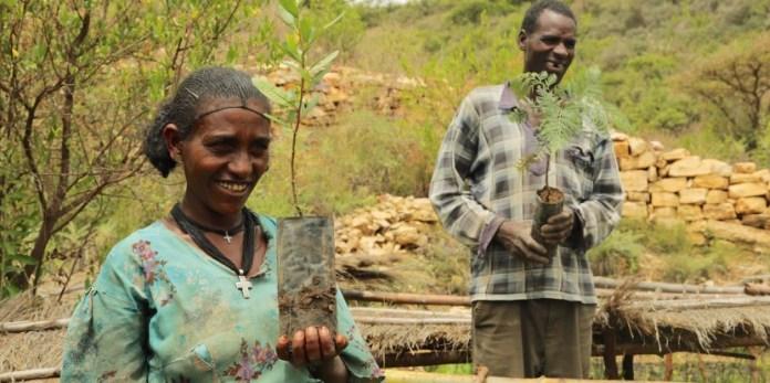 Ciudadanos etíopes en la jornada de plantación de árboles