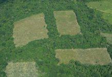 La tala de bosques, en ocasiones para dar paso a pastizales o cultivos ilícitos, es una de las causas de la deforestación que Colombia se propone contener y que recibirá aportes del Fondo Verde para el Clima. Foto: Infoamazonia