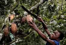 Cacao menores