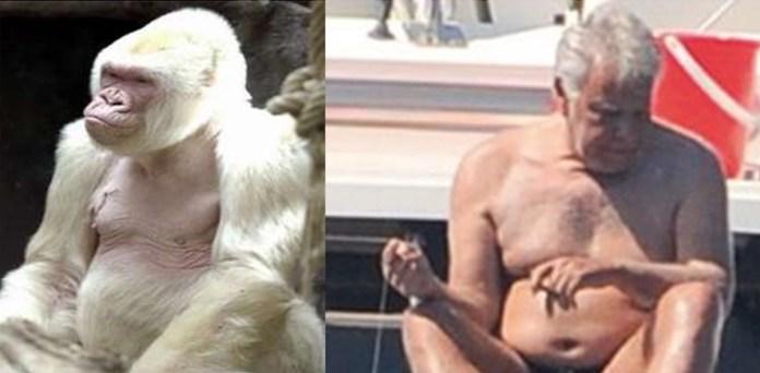Censura González simios primates