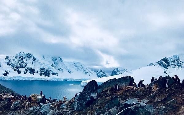Pingüinos en el Antártico, Greenpeace.