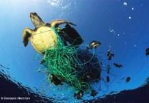 Numerosas especies marinas quedan atrapadas en los restos que acaban en el mar. © Greenpeace/ Marco Care.