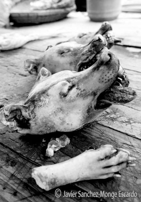 Javier Sánchez-Monge: Cabezas y patas de perro comercializadas para guisar en Asia.