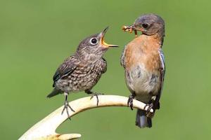 aves-raras-Foto-animalesraros-org