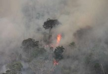 El Gobierno tardó una semana en enviar un equipo para apagar los incendios. ©INPE