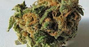 Cannabis: Podemos avanza argumentos para su legalización en España