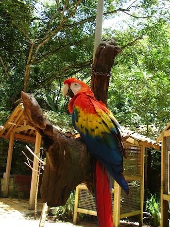 Adriana Bianco:. Macaw Mountain Bird Park &Nature Reserve