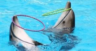 Virgin Holidays rompe con los delfinarios