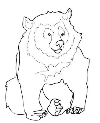 Dibujo-oso-himalaya