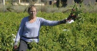 Extremadura: pimentón rojo de la Vera