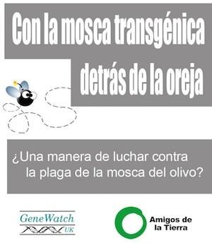 stop-mosca-transgenica