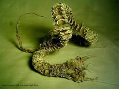 """El Gusano de la Muerte de Mongolia, también llamado """"Allghoi Khorkhoi"""" o """"Gusano del Intestino"""" por su parecido con algún parásito, es un gusano gigante de color rojo vivo capaz de matar a un animal grande o inclusive a un ser humano."""