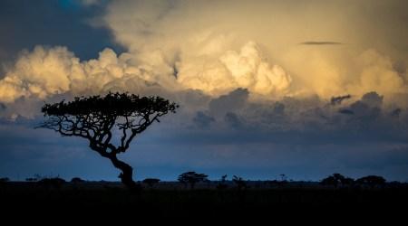 12-Day Grand Wildlife Safari Tanzania, East Africa (9)