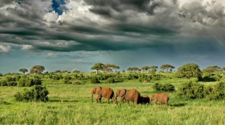 12 day safari vacation TANZANIA Great Migration Crossing, Wildlife & Cultural Immersion (5)