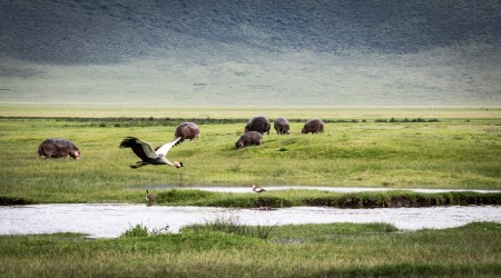 Wildlife & Cultural Immersion Safari book your dream trip (10)