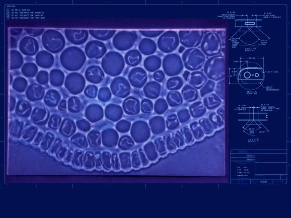 blueprint cells